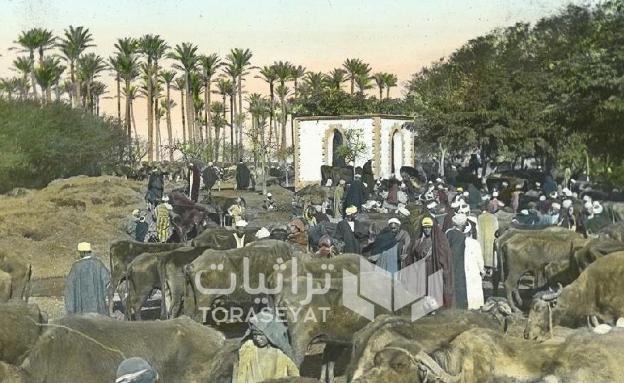 سوق الجاموس - شارع مراد زمان